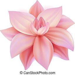 ピンクの花, さくらんぼ, lotos, 現実的, ベクトル