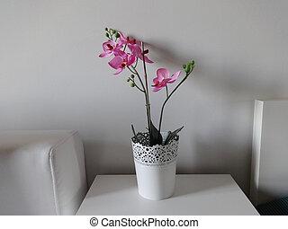 ピンクの花, ポット, 装飾, 内部, 白, 蘭