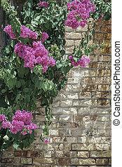 ピンクの花, 上に, れんがの壁, ∥ように∥, a, ボーダー