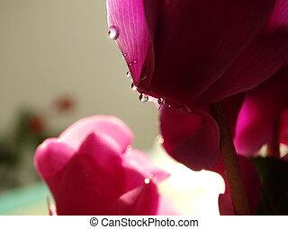 ピンクの花, 日光, 装飾, 内部, 花