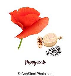 ピンクの花, popie., isolated., stem., イラスト, 花弁, ベクトル, 緑, 種, ケシ, ...