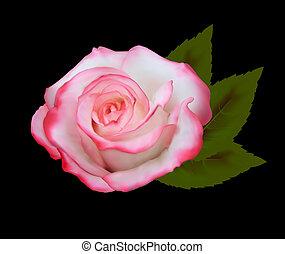 ピンクは 上がった, 美しい