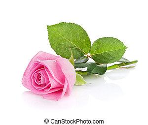 ピンクは 上がった, 花