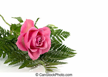 ピンクは 上がった, 葉, 緑