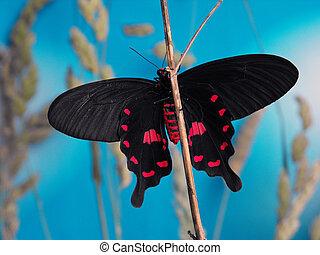 ピンクは 上がった, 蝶