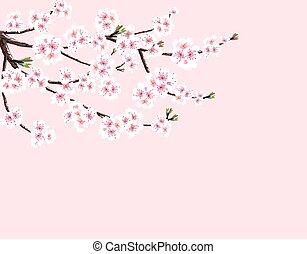 ピンク, さくらんぼ, 隔離された, イラスト, sakura., バックグラウンド。, flowers., ブランチ, 白