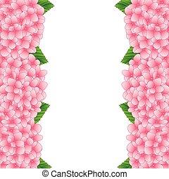 ピンク, アジサイ, 花, ボーダー