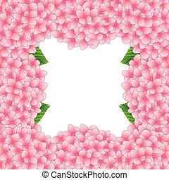 ピンク, アジサイ, 花, border2