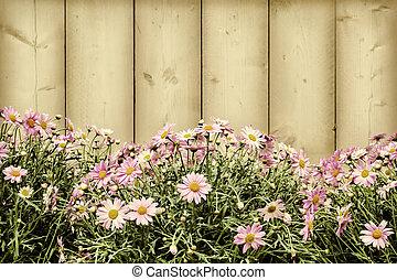 ピンク, イメージ, スタイルを作られる, レトロ, デイジー, 花
