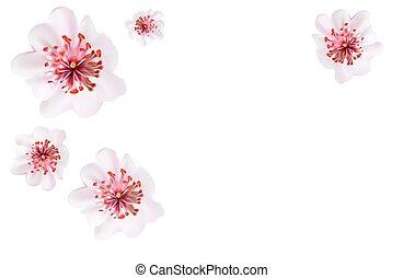 ピンク, スタイル, 花, さくらんぼ, 日本語, sakura, 花