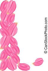 ピンク, セット, バラ, petals., 背景, 白