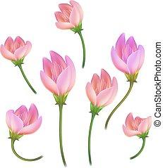 ピンク, セット, 花, さくらんぼ, lotos, 現実的, ベクトル