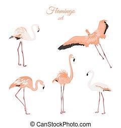ピンク, セット, 隔離された, 背景, 白, フラミンゴ