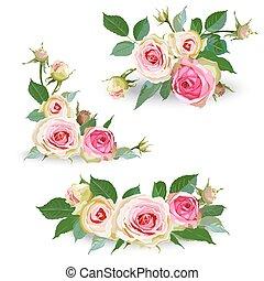ピンク, セット, roses.