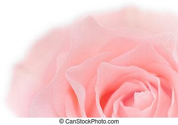 ピンク, パステル, クローズアップ, バラ, マクロ