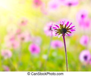 ピンク, フィールド, 花