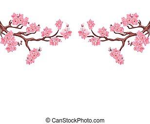 ピンク, ブランチ, さくらんぼ, 2, イラスト, 隔離された, sakura., バックグラウンド。, 対称である, 白, blossoms.