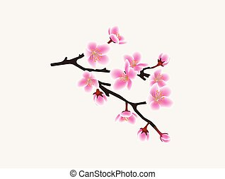 ピンク, ブランチ, 花, 木, -, 隔離された, sakura, 背景, さくらんぼ, 白い花