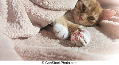 ピンク, 休む, おもちゃ, ねこ, うそ, 柔らかい, 赤