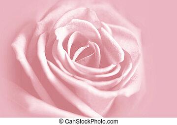 ピンク, 優しい, 背景, バラ