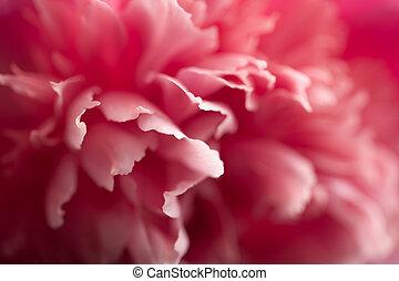 ピンク, 抽象的, 花, シャクヤク, 背景