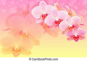 ピンク, 斑点を付けられる, ロマンチック, 背景, bokeh, blured, 花, 蘭