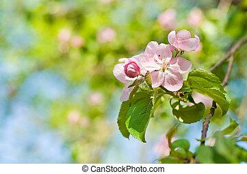 ピンク, 春の花