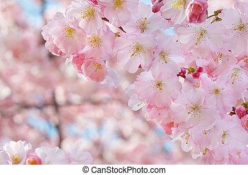 ピンク, 春の花, ボーダー