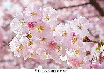 ピンク, 春の花, 小枝