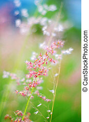 ピンク, 春の花, 背景