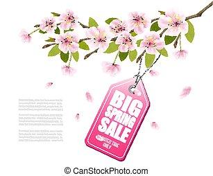 ピンク, 春, セール, 割引, ベクトル, sakura, 背景, 咲く, tag.