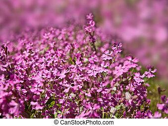 ピンク, 春, 背景