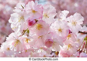 ピンク, 春, 背景, 花