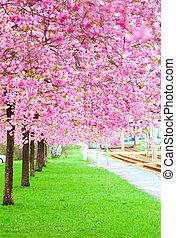 ピンク, 春, 開くこと, (sakura, 流れ, 木, 緑の草