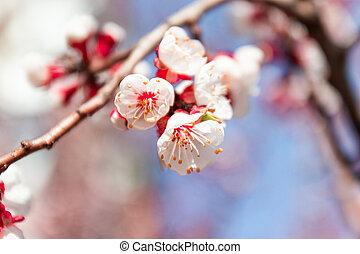 ピンク, 春, blossom., 芸術, 背景