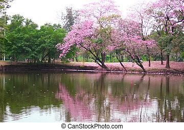 ピンク, 木, 庭