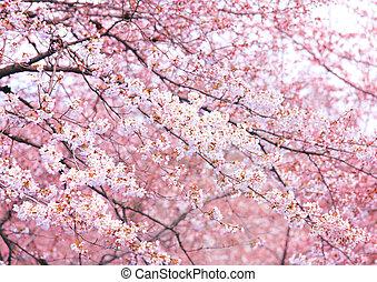 ピンク, 木, sakura
