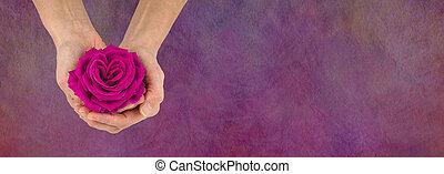ピンク, 概念, バラ, バレンタイン, メッセージ, 旗, 日