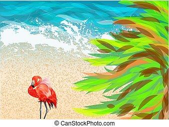 ピンク, 浜, フラミンゴ