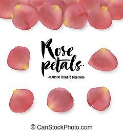 ピンク, 現実的, セット, ローズ 花弁