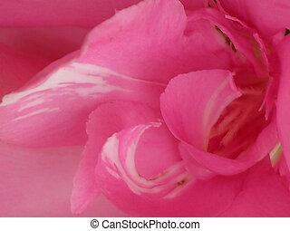 ピンク, 細部