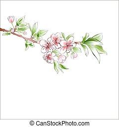 ピンク, 花, さくらんぼ, バックグラウンド。, flowers., デザイン, ブランチ, 春, 白