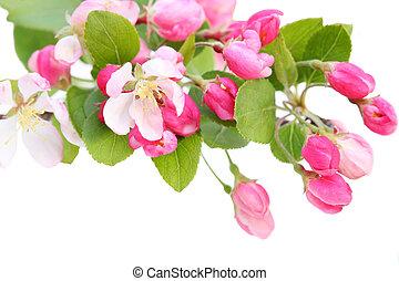 ピンク, 花