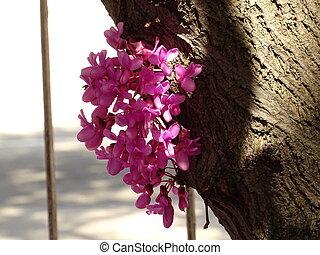 ピンク, 花, 小さい木, 春