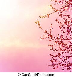 ピンク, 花, 木, アップル, 日没