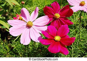 ピンク, 赤, 花