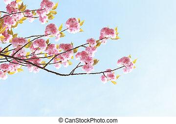 ピンク, 青い花, 空