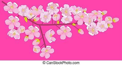 ピンク, illustration., コピースペース, border., 花, さくらんぼ, ∥あるいは∥, ベクトル, つぼみ, ブランチ, 花, shoots., 空