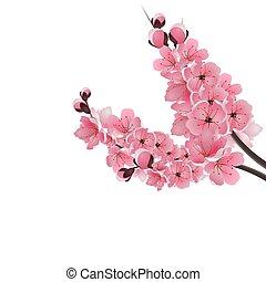 ピンク, sakura., 花, さくらんぼ, アル中, 隔離された, イラスト, 日本語, 暗い, バックグラウンド。, 2, ブランチ, close-up., 白