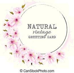 ピンク, vector., 春, sakura., 背景, 咲く